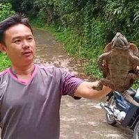 พบเต่าปูลูใกล้สูญพันธ์ บนดอยสุเทพ
