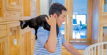 """ชวนเที่ยว """"Mao Mao Cat Pattaya"""" โรงแรมแมวแห่งใหม่ในพัทยา"""