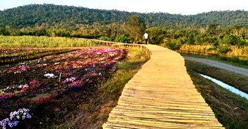 ชมธรรมชาติทุ่งดอกไม้ สูดโอโซนกลางภูเขาที่วังน้ำเขียว