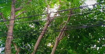 สลด! หนุ่มวัย 27 ปีมาช่วยตัดกิ่งไม้ พลาดถูกไฟฟ้าดูดเสียชีวิต