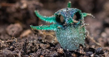 """""""พิศวงตานกฮูก"""" พืชแปลกสายพันธุ์ใหม่หนึ่งเดียวในโลก ที่ อ.อุ้มผาง"""