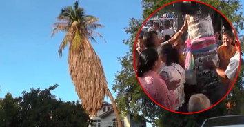 """แห่ขอโชคลาภแน่นขนัด """"ต้นมะพร้าว 100 ปี"""" ยืนต้นตระหง่านไม่ยอมผลัดใบ"""