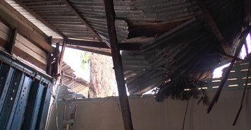 ต้นลำไยอายุ 100 ปีหักทับหลังคาบ้านทะลุ พี่น้องรอดตายหวุดหวิดเชื่อบารมีศาลตายายคุ้มครอง