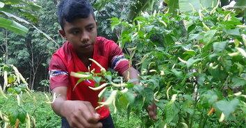 หนูน้อยกตัญญูวัย 13 ปี ปลูกผักขายผลผลิตเกินคาด คนชื่นชมแห่ซื้อ