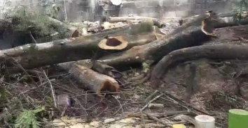 อุทาหรณ์! นักตัดไม้พลาดท่าถูกไม้ทับศีรษะเสียชีวิตคาที่