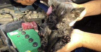 รอดมาได้! แมวน้อยร้องเสียงหลง กู้ภัยหาตัวจนเจอในห้องเครื่องรถ