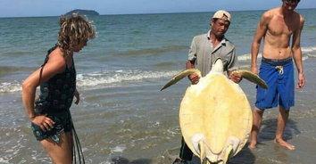 น่าเศร้า! พบซากเต่าตนุตายไซส์ยักษ์ ถูกคลื่นซัดเกยหาด ไม่ทราบสาเหตุการเสียชีวิต