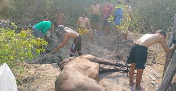 กาฬโรคม้า! โรคอุบัติใหม่ม้าชายหาด ป่วยตายพร้อมกัน 6 ตัวรวด
