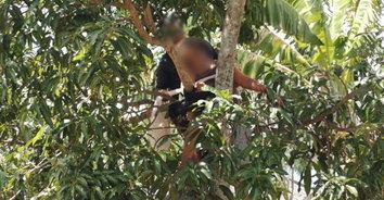 หวาดเสียว! หญิงติดบนต้นมะม่วง โดนเคียวตัดมะม่วงบาดแผลลึก
