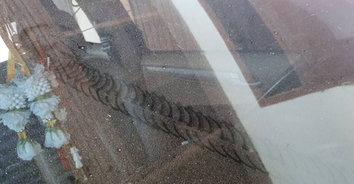 แห่ส่องเลขเด็ด! พบรอยประหลาดบนกระจกรถยนต์ ส่องป้ายทะเบียนรถ