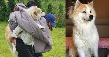สะเทือนใจ! เจ้าของแบกหมาสุดรักแจ้งความ หลังถูกร็อตไวเลอร์รุมกัดจนตายคาบ้าน