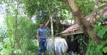 ใหญ่ยักษ์! ตะลึงพบต้นกระบุกป่าสูงกว่า 2 เมตร