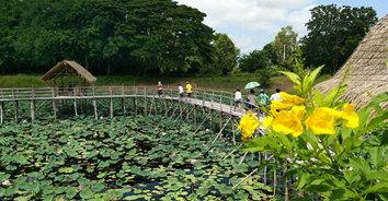 ชมทุ่งดอกบัวชมพู บนสะพานไม้รักร้อยรวมใจกลางบึง