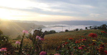 ชมทะเลหมอกท่ามกลางดอกไม้ บนเนินภูทับสี่ บ้านน้ำจวง
