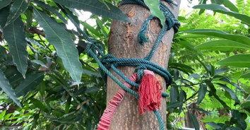 หนุ่มเครียดตกงาน ไม่มีคนจ้าง ผูกคอตายใต้ต้นมะม่วง