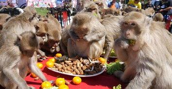 จอถูกใจสิ่งนี้! ซ้อมเลี้ยงโต๊ะจีนลิงดูว่าชอบกินอะไร ก่อนเลี้ยงจริง