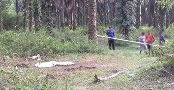 พังพิโรธ! ช้างคลั่งกระทืบชาวบ้านขาดสองท่อนตายสยองคาที่