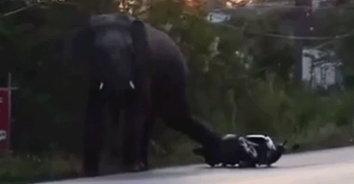 มหันตภัยช้างป่าถล่มเมือง! ช้างป่าเข้าเมือง กระทืบรถจยย.พังเสียหาย