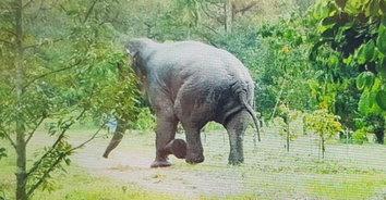 ช้างโหดโคตรทมิฬ! ช้างบุกไล่เหยียบคนตาย ร่างกายแหลกเหลว สยดสยอง