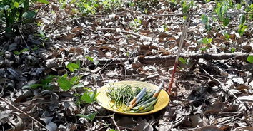 เก็บเห็ดสยอง นอนตายกลางป่า! หนุ่มเข้าป่าหาเห็ด พบเป็นศพข้างปืนแก๊ป