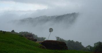 บรรยากาศสดชื่นรายล้อมหมอก ที่โครงการพัฒนาป่าไม้ฯ ภูหินร่องกล้า