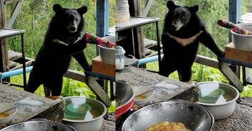 """หิวเมื่อไหร่ก็แวะมา! """"น้องหมีควาย"""" อยากกินไข่เจียว ลงมาขอหน่อย"""