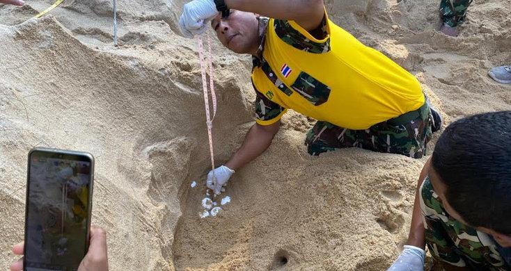 เรื่องดี! พบแม่เต่าขึ้นมาวางไข่บนหาดทรายแก้ว เป็นรังที่ 2 ของ จ.ภูเก็ต