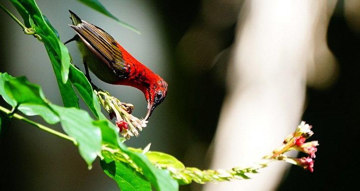 """""""บ้านขามสายน้ำมีชีวิต"""" ส่องนกกินปลีคอแดง ดอกไม้ป่าสีสันสวยงาม"""