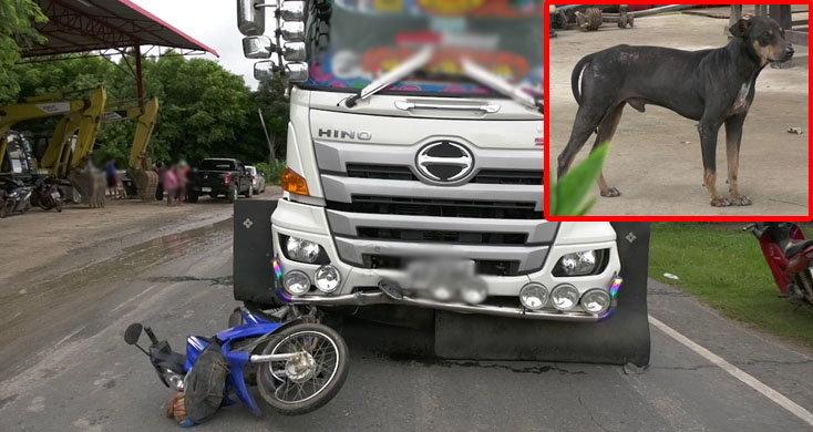 หมาฆาตกรไล่กัดคุณตา ขณะขับมอเตอร์ไซค์ชนประสานงานรถพ่วงดับสลด