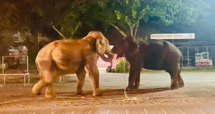 สงครามไอยรา ประสานงาถล่มปฐพี! ช้างป่าโชว์งัดงา ก่อนบุกบ้านขโมยอาหารแมว