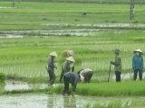 ชินจ่าว เวียดนาม ท่องสามแดนดิน ถิ่นมรดกโลก