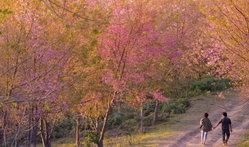 Dream Destinations 2 ชม 22 เส้นทางดอกไม้ทั่วไทย