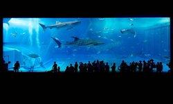6 พิกัดโลกใต้น้ำ สุดยอด อควาเรียม น่าไปแห่งเอเชีย!