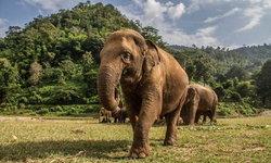 รวมช่องทางบริจาคช่วยเหลือช้างไทยทั่วประเทศ ร่วมผ่านวิกฤตในช่วง COVID-19 ไปด้วยกัน