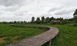 สะพานไม้ไผ่บ้านเตยโคราช เขียวขจีต้อนรับการกลับมาของการท่องเที่ยว