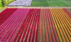 นึกว่าอยู่ญี่ปุ่น! สวนดอกไม้ I Love Flower Farm ทุ่งดอกไม้นานาชนิดสีสันสดใสเหมือนสายรุ้ง