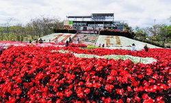 ฟลอร่าพาร์ควังน้ำเขียว สรวงสวรรค์แห่งดอกไม้เมืองหนาว