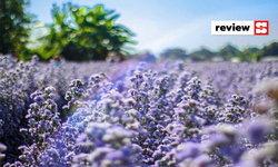 รีวิวเที่ยวเชียงใหม่ บุกฟาร์มผึ้ง เช็กอินสวนดอกไม้  มุมมองใหม่ที่หลายคนอาจยังไม่เคยสัมผัส
