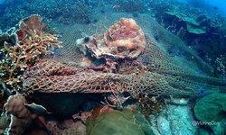 ตะลึงพบจุดดำน้ำลึกแห่งใหม่ใกล้เกาะเสม็ด แหล่งพันธุ์ปะการังเขากวางที่ใหญ่ที่สุดในอ่าวไทย