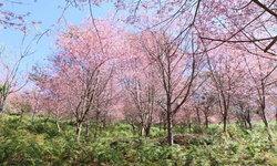 ประกาศปิดการท่องเที่ยวภูลมโล พักฟื้นฟูธรรมชาติ