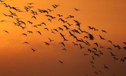ภาพหาดูยาก! ฝูงนกกระยางกว่า 1,000 ตัวที่อ่างเก็บน้ำคลองหยา กระบี่