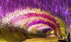 เปิดภาพสุดงดงาม 3 จุดชมดอกวิสทีเรียญี่ปุ่น 2021 ชมได้ช่วง เม.ย. – พ.ค.เท่านั้น
