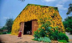 ดอกเหลืองชัชวาลปกคลุม The Birder's Lodge เขาใหญ่ สร้างมิติใหม่ในการถ่ายรูป