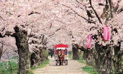 3 สถานที่ชมซากุระยอดนิยมในเขตมิจิโนะคุ ภูมิภาคโทโฮคุ ญี่ปุ่น