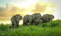 โขลงช้างป่าเขาใหญ่ อวดโฉมที่ทุ่งหญ้าโป่งทุ่งกวาง มหัศจรรย์แห่งธรรมชาติหาชมได้ยาก