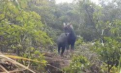มหัศจรรย์แห่งธรรมชาติ ฝูงสัตว์ป่าเขาใหญ่ ออกมาโชว์ตัวท่ามกลางความชุ่มฉ่ำในหน้าฝน
