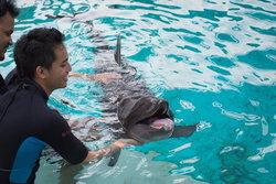Dolphin Island มาเที่ยวเกาะนี้ ได้เพื่อนใหม่เป็น..โลมา