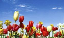 ตระการตาทุ่งดอกไม้ทั่วโลก ที่จะทำให้หัวใจคุณเบ่งบานตลอดทั้งปี