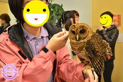 พาเที่ยวคาเฟ่นกฮูกสุดน่ารัก Owl Family Hakata ที่ Fukuoka