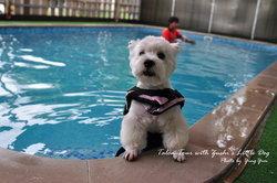 """ตามหาโรงแรมหมาในเมืองกรุง """"DOG SOCIETY"""""""